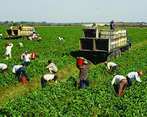 Does Obamacare Put Farm Workers Health Care at Risk?