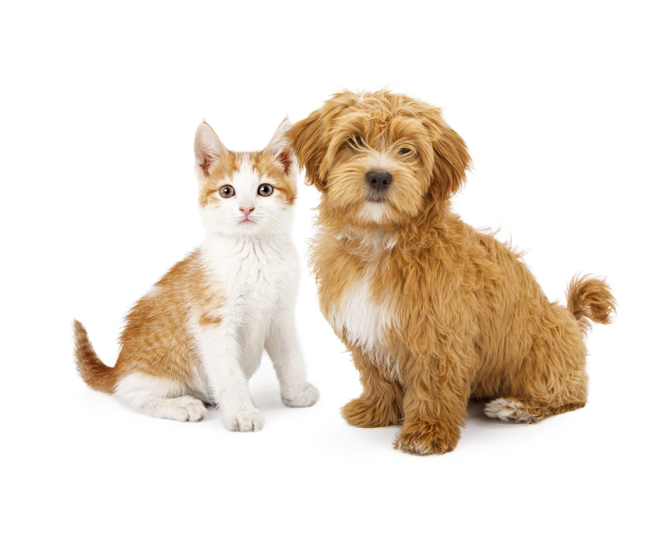 Orange and White Puppy and Kitten