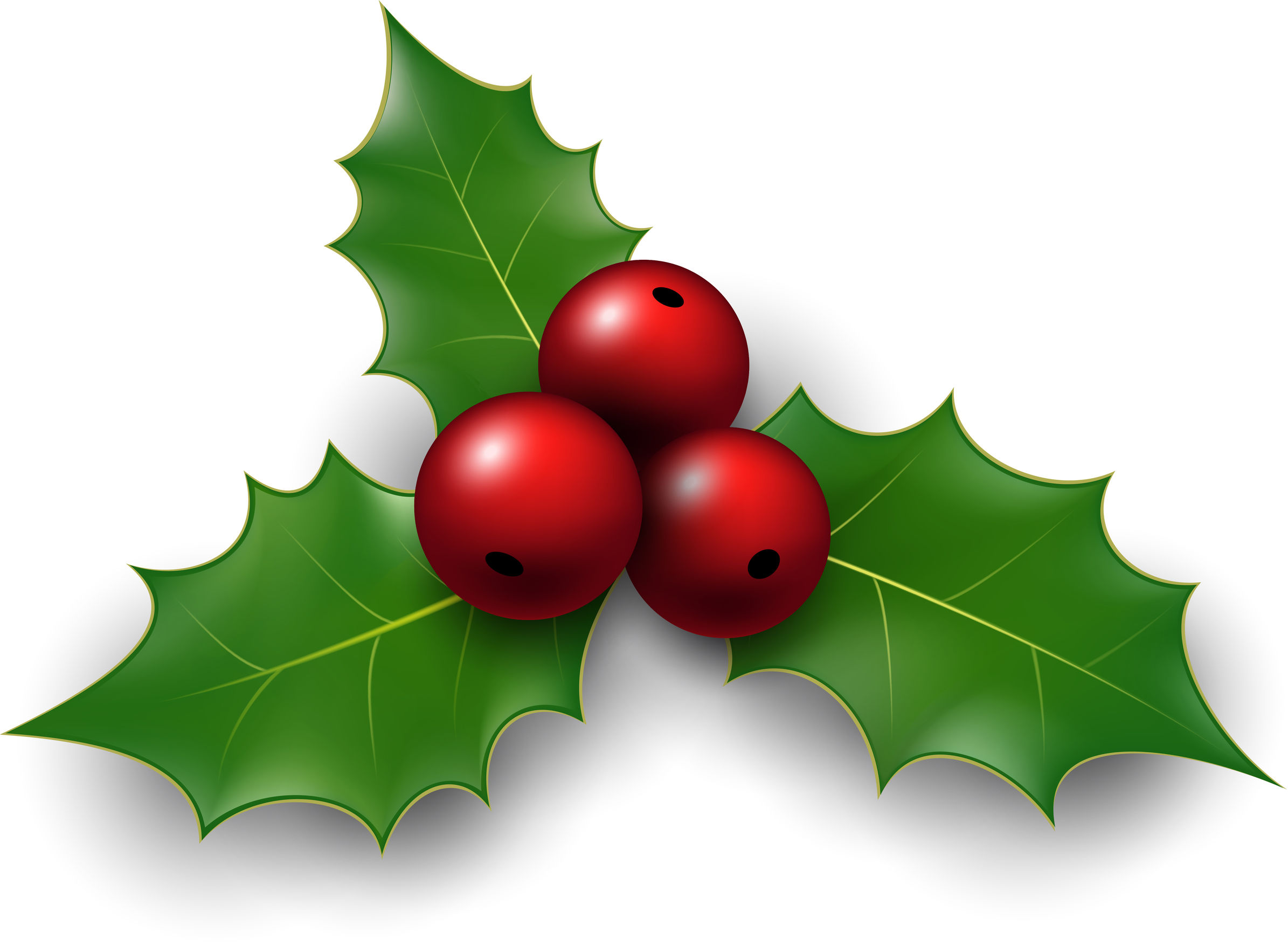 34593179 – twig of holly with berry and leaves. vector illustration.